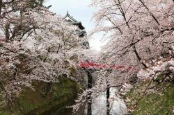 Hirosaki Castle!