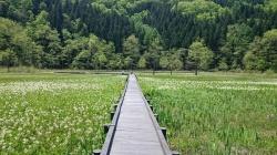 Oyomi Marsh