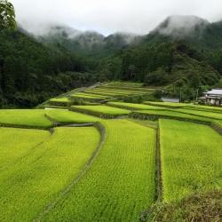 Toho Village
